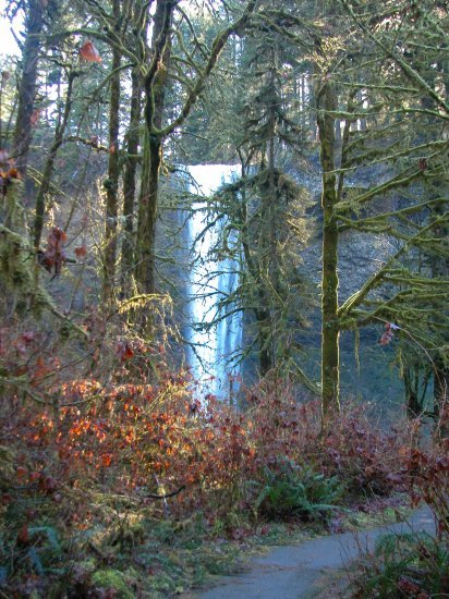 Silver Falls: South Falls in the Winter 15