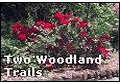 Click to enter Two Woodland Trails